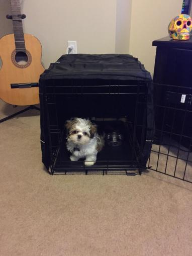 "Dog Cage Kennel Only Black Midwest Quiet 48"" XXL"